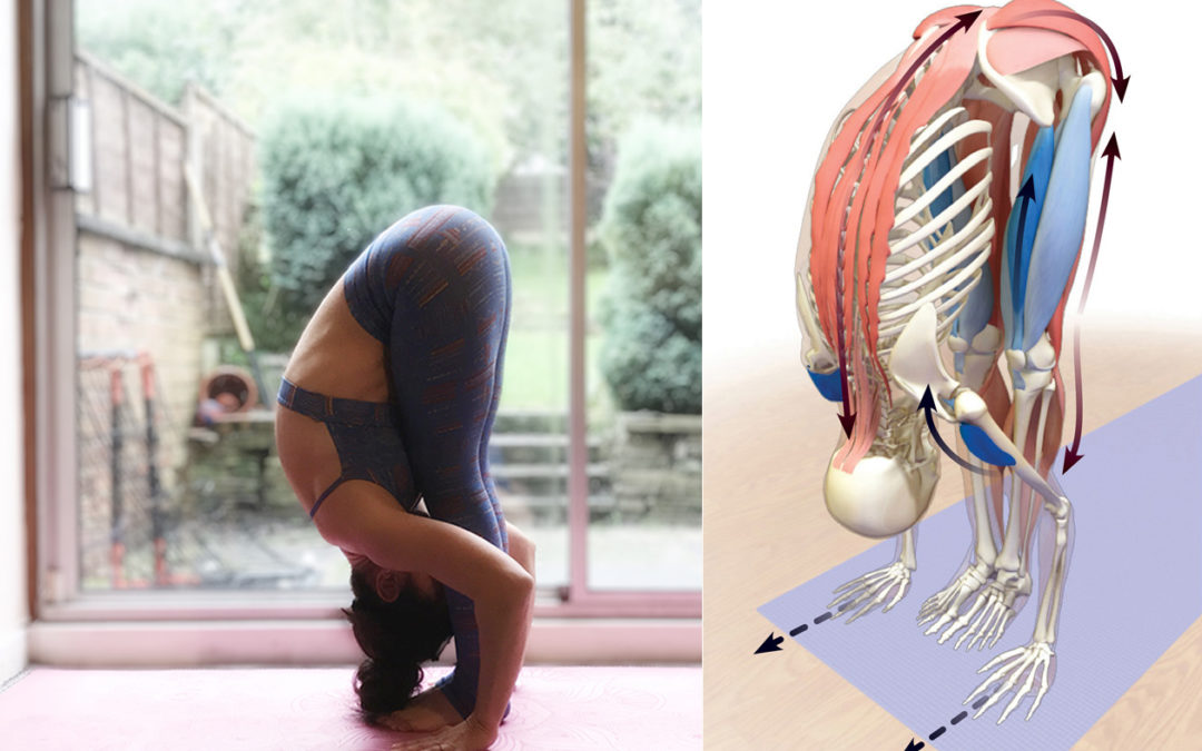 Pose Analysis: Standing Forward Fold (Uttanasana)